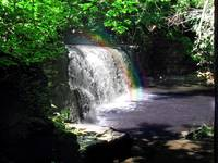 Rainbow Wooded Waterfall