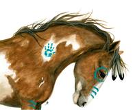 Indy Pinto Horse