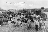 Threshing Grain near Crookston, Minnesota