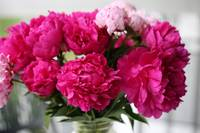 Wonderful Peonies