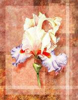 Gorgeous Iris Decorative Painting