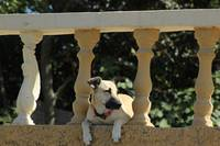 Dog Lying in a Railing