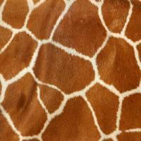Giraffe  by Karen Adams