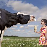 """""""Cow Licking a Girls Ice Cream Cone"""" by StephanieDRoeser"""