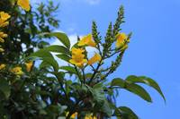 Yellow Flowers Blooming on a Tree
