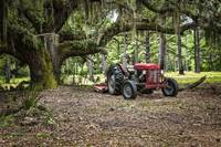 Massey Ferguson under the Old Live Oak