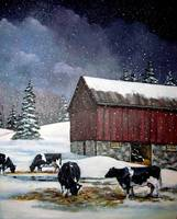 Holstein Dairy Cows in Snowy Barn Yard with Old Ba