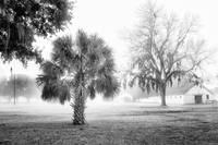 Winter Palmetto