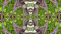 Tree Kaleidoscope #2