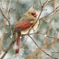 SnowBirds gallery