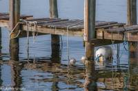 Dock and Buoys -