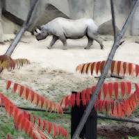 The Rhino Walk by Karen Adams