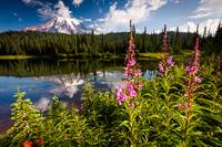 Wild Flowers and Mt Rainier Horizontal