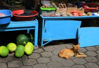 Dog in an Outdoor Market