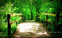 Bridge in the Woods Copyright