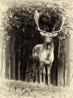 The deer 2 BW