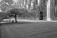 Cambridge, late Spring 12 B&W