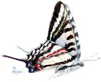 Zebra Swallowtail butterfly flighted