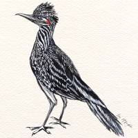 cool desert roadrunner Art Prints & Posters by Lisa McLaughlin