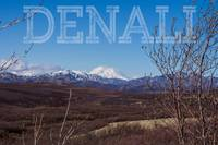 View of Denali from Denali National Park