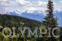 View of the Olympic Range from Hurrican Ridge in O