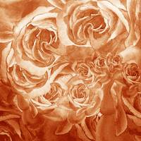 Vintage Rose Petals Abstract Decor