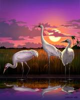 Whooping Cranes Tropical Florida Everglades Sunset