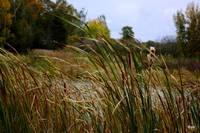 grasses in the fall