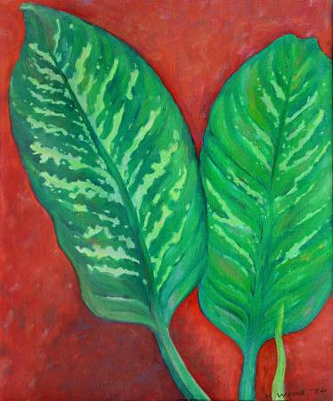 Two Dieffenbachia Leaves