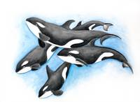 Orca pod In Blue