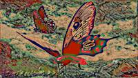 Abstract Butterfly Art 16