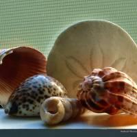 Sea Shells on a Window Seal by Richard Thomas