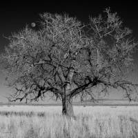 Moonrise over Stone Ranch Stage Station Art Prints & Posters by Sam Sherman