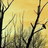 Turkey Vulture Waiting by Karen Adams