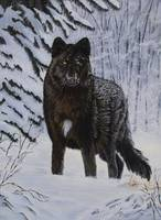 Surprise Encounter - Black Wolf
