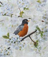 Robin And Cherry Blossoms