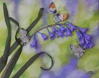 Bluebells and Butterflies