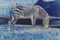 Zebra- electric blue/ black.