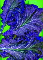 Psychedelic Leaves