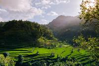 Rice Terraces Under the Sunlight
