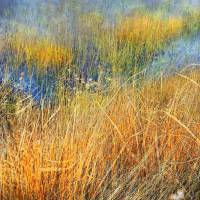 spring time flooded field by r christopher vest