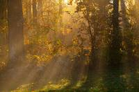 A Good Morning From Above
