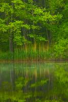 Green Reflects