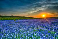 Endless Bluebonnets into the Sunset