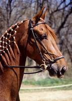 Horse with Braided Mane