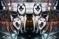 Expressive Husky Sketch Mixed Media D42216