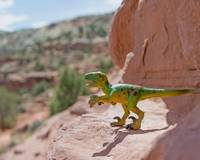 Raptor in Escalante