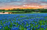 Bluebonnet Sunset at the Park