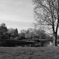 Red Hammock in Franklin Park - Black and White by Karen Adams