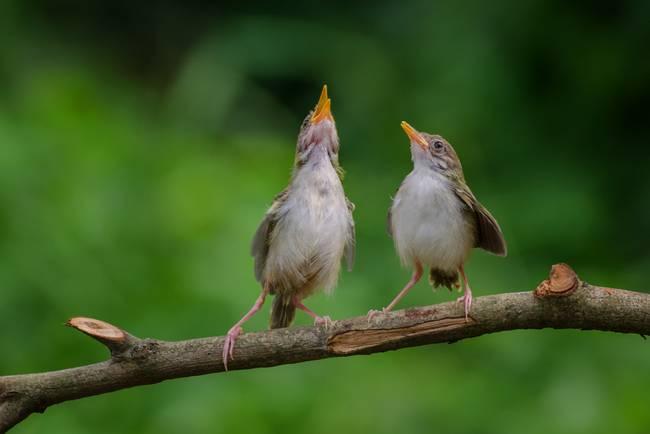 U201cSinging Birdsu201d By DSlightphotography